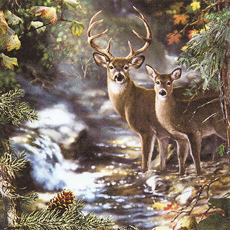 Servetti Deers on a Creek
